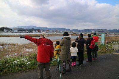 2月野鳥観察1