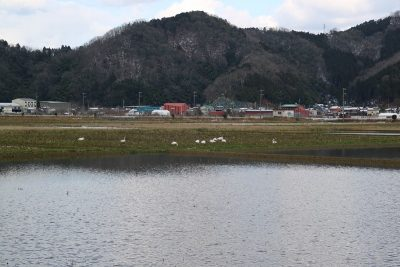 2月野鳥観察2
