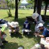 菅村先生の植物観察会6月度(実施報告)