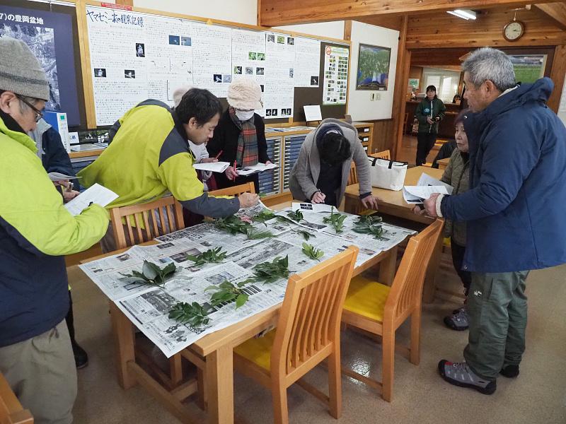 shokubutu190127-2