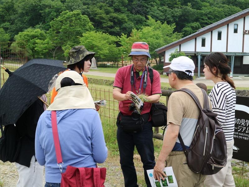 shokubutu190526-1