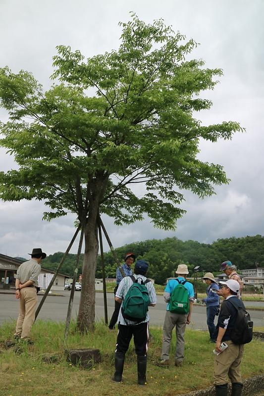 shokubutu190623-2