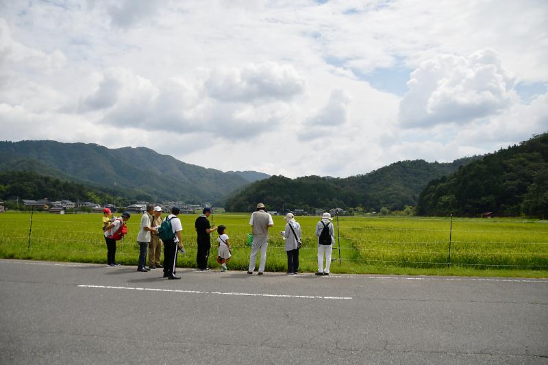 shokubutu190825-3