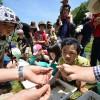 田んぼの学校2015年5月