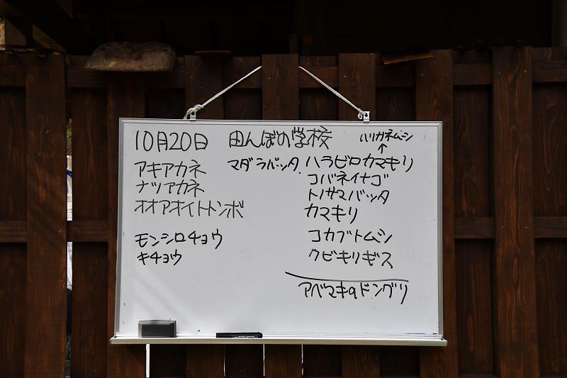 tanbo191020-10